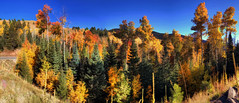 Painted Forest (JoelDeluxe) Tags: santafenationalforest nmroad475 fall colors 2017 hdr joeldeluxe