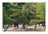 Il faut qu'une porte soit ouverte ou fermée / Séoul - Corée du Sud (PtiteArvine) Tags: jardin jardinsecret séoul coréedusud arbres vert porte forêt automne
