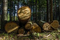 (ErrorByPixel) Tags: woodlogs logs wood trees nature forest pentax k5 pentaxk5 errorbypixel handheld czechia czech republic chechrepublic samyang 1620 ed as umc cs samyang1620edasumccs 16mm tree pentaxart woodland