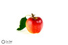Just one apple. (Sue_Todd) Tags: apple apples autumn colours commercialphotographer food foodphotographer fruit fruits green months october photographer red reds suetodd suetoddphotography typesofpicture white bianco biały blanc blanco branco czerwony frugt frukt fruta frutta greenish greens greeny groen grön grøn grønn grün hvid hvit productphotographer punainen rod rojo rood rosso rot rouge valkea valkoinen verdajn verde vermelho vert vihreä vit weis wit yeşil zielony