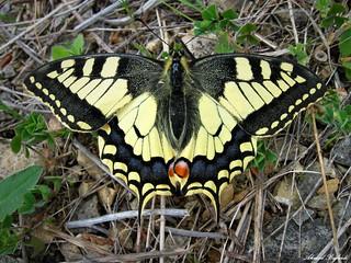 Butterfly 1468