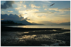 Sunset melody (Alice 2017) Tags: 2017 clouds bird evening sun sunset autumn seashore sea water hongkong ilce6000 sony a6000 sonya6000 sonysel1670zcarlzeissvariotessart tessar zeiss carlzeiss beach 1500v60f aatvl01 autofocus aatvl02 3000views 3000v120f aatvl03