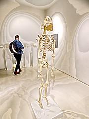 Hips Don't Lie (Steve Taylor (Photography)) Tags: art digital sculpture museum man uk gb england greatbritain unitedkingdom london skeleton hips skull
