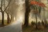 Foggy FF (BirgittaSjostedt) Tags: fence landscape paint tree road fog haze leaves autumn birgittasjostedt allé fencefriday