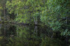 nature (Stefano Rugolo) Tags: stefanorugolo pentax k5 smcpentaxda1855mmf3556alwr nature reflection green tree forest wood woodland foliage branches leaves water lake skog vatten hälsingland sverige sweden natur träd landscape