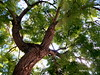 Um Olhar árvore. (ashera08) Tags: ashera amizades paisagens árvores portugal fotos picasa flickr friends sedrul