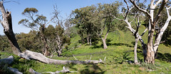 Blieschke Road (Aaron K Hall) Tags: countryside mount grey big nationalpark remarkable heysentrail mt bush tress gray melrose southaustralia australia au
