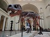 Chicago, Field Museum, Sue the Tyrannosaurus rex IMG_20171012_120509 (ianw1951) Tags: usa chicago thefieldmuseum naturalhistory dinosaus tyrannosaur tyrannosaurusrex reptiles museums midwest illinois fossils