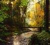Herbstwald (Dirk Hoffmann Fotografie) Tags: green autumn leaves leav polenz polenztal saxony switzerland sächsische schweiz saxonswitzerland saechsische forest river light sun sunlight
