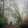 foggy days ahead (manyfires) Tags: hasselblad hasselblad500cm square film analog mediumformat forestpark forest woods trail path outdoors pnw pacificnorthwest oregon pdx portland fog foggy mist misty michael photographer trees autumn fall hiking hike
