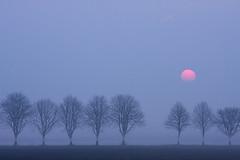 Nebelmorgen (renatecamin) Tags: trees nature fog blue