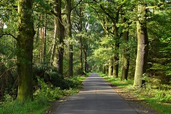 summer moods (JoannaRB2009) Tags: summer mood dolinabaryczy dolnyśląsk polska poland path road forest woods tree trees sunlit green oak oaks nature alley avenue