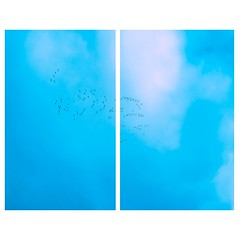 Unbenannt-1 (marvin.klein98) Tags: sky birds sputh south blue babyblue baby film seperate art artista artist artistonflickr tumblr flickr iso100 cloud clouds landscape camera photography sony alpha 6000 f earth nature