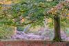 (Mark Greening) Tags: tree autumn westonbirtarboretum westonbirt england unitedkingdom gb