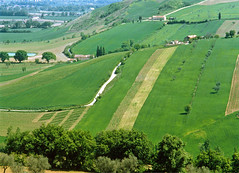Green hills (giorgiorodano46) Tags: maggio1981 may 1981 giorgiorodano marche monterado italy campagna countryside primavera spring verde green meadows campi printemps champs vert