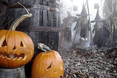 Halloween 1921 (pumpkinrot) Tags: halloween pumpkinrot pumpkinrotcom yard haunt twig witches pumpkins jackolanterns