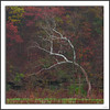 Fall (Chris Mahoney - AACStudio) Tags: silver tree fall canon 55250 landscape colors red green yellow illinois peoria photography travel