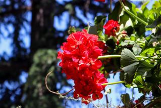 Temps de flors_0088