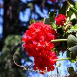 Temps de flors_0088 thumbnail