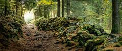 Moss alley (Jean-Luc Peluchon) Tags: fz1000 lumix vert allée chemin mur automne lumière