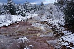Red waters (Francoise100) Tags: rushing boyntoncanyon nature landschaft paisagem paysage creek stream sedona red rot rouge water wasser snow white pines sapins arizona az usa southwest schnee neige