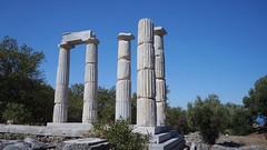 Sanctuarul marilor zei - coloane din Hieron