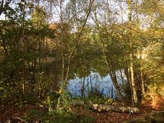 The lake through the trees (jeanettewhitmarsh) Tags: lakewood autumn trees
