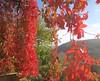 Crveno - Red (Hirike) Tags: postira brač dalmacija croatia hrvatska autumn jesen