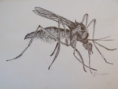 Mosquito (rachael242) Tags: mosquito insect bite sting wings inktober2017 inktober pencil sketch draw drawing illustration paper art create animal eat filthy