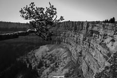 """""""mi butto? - pensò l'albero"""" - Creux du Van (MarcoAgustoniPhotography) Tags: schweiz suisse svizzera creux du van neuchâtel"""