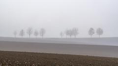 Silhouetten im Nebel - Silhouettes (ralfkai41) Tags: bäume minimalismus silhouetten silhouettes nebel landschaft nature outdoor landscape minimalism natur trees