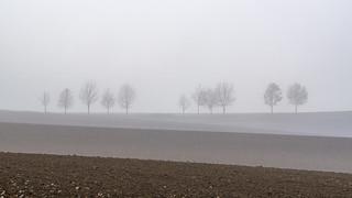 Silhouetten im Nebel - Silhouettes