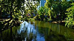 Un bosque urbano (Franco D´Albao) Tags: francodalbao dalbao nikond60 efecto effect water trees park estanque pond pintura painting vigo galicia