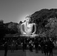 Kamakura Daibutsu (tokyobogue) Tags: japan kamakura kanagawa nikon nikond7100 d7100 35mmf18g trees green shrine old architecture religion daibutsu buddha kamakuradaibutsu bigbuddha statue blackandwhite blackwhite monochrome kotokuin