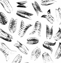 58595.06 Lupinus perennis (horticultural art) Tags: horticulturalart lupinusperennis lupinus lupine pods seedpods pattern blackandwhite bw negative