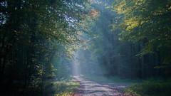 Wonderland (ursulamller900) Tags: pentacon2829 autumn herbst landscape landschaft autumncolors colorful habichtswald