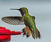 That Lil Hummer (jimgspokane) Tags: hummingbirds birds wildlife idahostate today´sbest otw