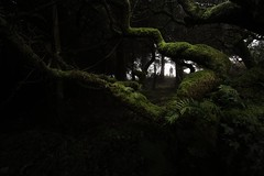 Misty mood (G.V Photographie) Tags: britanny france bretagne forest landscape misty trees moss silhouette