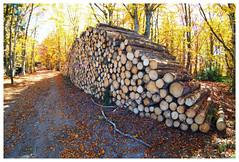 automne parc du pilat (LUDOVIC. R) Tags: automne parc du pilat 7mm5 28 7artisans olympus em 10 micro43 arbre