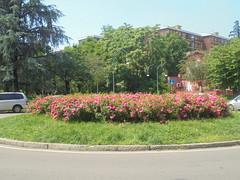1135 (en-ri) Tags: rose roses aiuola sony sonysti