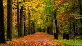 Autumn Mastbos Breda