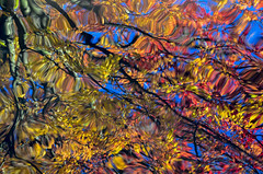 Autumn abstract (James_D_Images) Tags: pond ripples waves autumn fall tree leaves foliage colourful reflection granvilleisland vancouver britishcolumbia