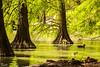 Parco Bucci (Faenza) (paolotrapella) Tags: parco bucci natura alberi acqua verde tamron70300vc canon paolotrapella faenza italia