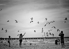 Hope (Mister Blur) Tags: happy monochrome monday hope freedom heroes oneday blackandwhite bw beach birds flying seagulls gaviotas volando puerto progreso yucatán méxico nikon d7100 35mm hmm