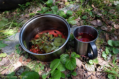 Forest tea - Our drink in Altai (Tatters ✾) Tags: altai russia tea mug wildberries ground