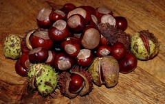 conkers horse chestnuts 2017 (8) (Simon Dell Photography) Tags: conker autumn horse chestnut brown shell large lots loads winter uk england old english game