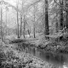 Mamiya390 (salparadise666) Tags: mamiya c330 sekor 80mm f32 90sec orange filter fomapan 10064 caffenol rs 13min nils volkmer vintage tlr medium format 6x6 square film analogue camera kandscape nature longtime exposure forest creek trees bw black white monochrome diagonal view hannover region niedersachsen germany
