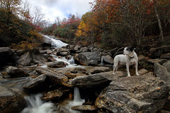 Lower Yellowstone Falls, North Carolina (csnyder103) Tags: petey dog poser northcarolina blueridgeparkway graveyardfields loweryellowstonefalls pigeonriver fall autumn water waterfall canoneos6d tokina1628f28 wonderpana