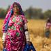 Sindhi Worker
