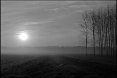 Misty landscape at sunrise (Romain Massola) Tags: nature landes arbre tree champ field campagne country countryside leica m6 canon 50mm canon50mmf14ltm ilford hp5 bw nb blackandwhite noiretblanc bwfp epson v700 epsonv700 rodinal